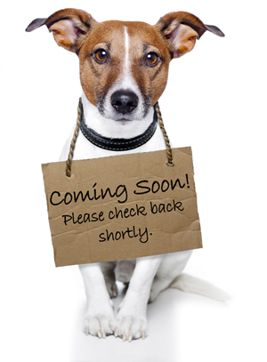 COMING-SOON-jack-russell-image